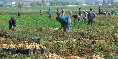 AGRICULTURE-ALGERIA: GOVERNMENT TARGETS FOOD SECURITY AND TRADE DEFICIT REDUCTION