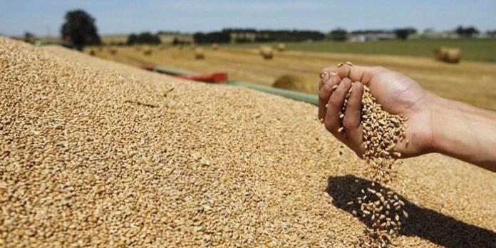 CEREAL PRODUCTION EXPECTS 4.6 MILLION TONS FOR THE 2017 SEASON