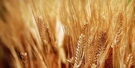 ALGERIA'S GRAIN PRODUCTION EXPECTED AT 4.6 MLN TONNES FOR 2017 VS 3.3 MLN TONNES IN 2016 - SOURCE