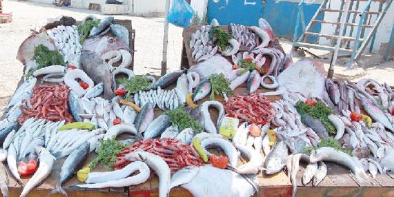 Algeria: Fish prices declined in the market, due to overexploitation of fishery resources