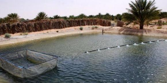 Algeria : Agriculture Minister calls for encouraging aquaculture in southern regions