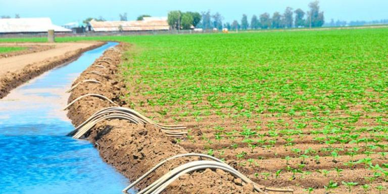 Agriculture: Algerian, Qatari operators meet to look into cooperation opportunities