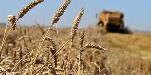 Algiers-Cereals: One billion dollars saved from high national output in 2018-2019