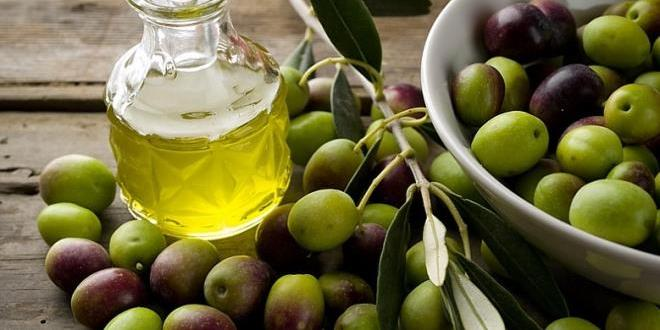 Tunisia- Expected exports of Tunisian olive oil will not exceed 63% of production (ONAGRI)