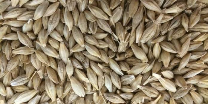 Algeria purchases up to 117,000 tonnes feed barley in tender