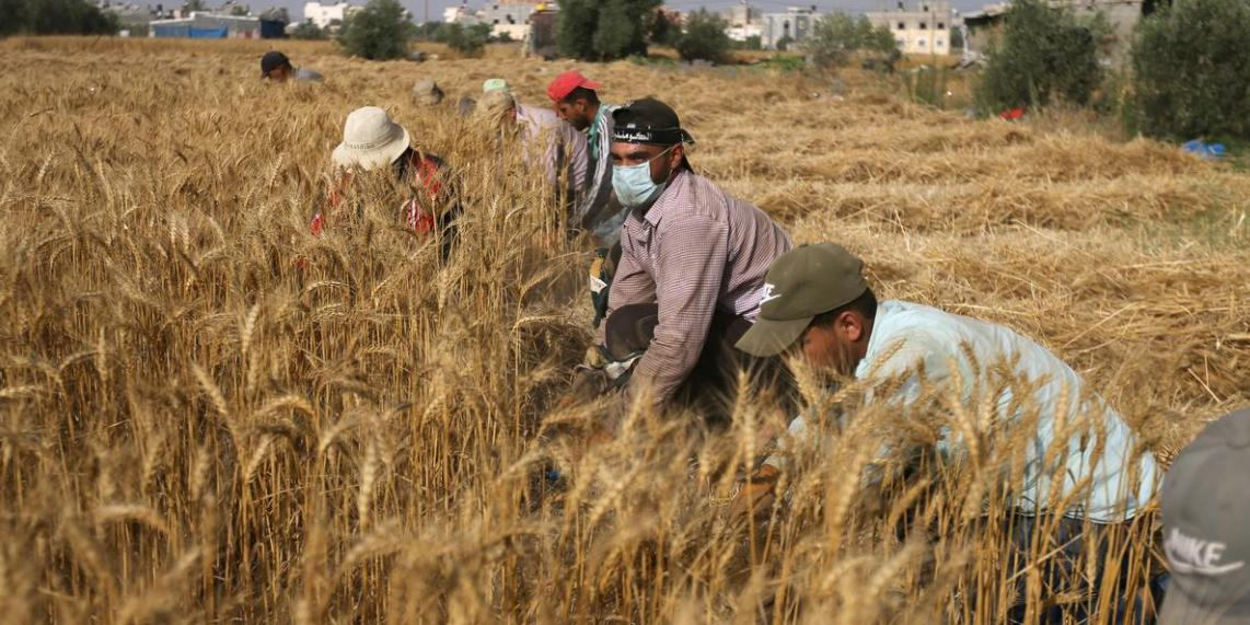Egypt increases imports, encourages domestic production to maintain food security amid pandemic
