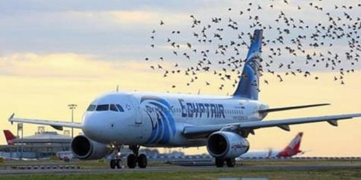 EgyptAir offers discounts on flights between Cairo and Saudi Arabia cities